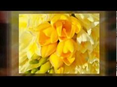 Abraham Hicks ~ All you have to do is decide what you want, and talk yourself into it - YouTube