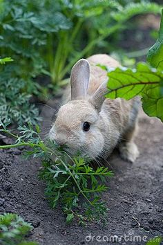 Cottage on Bunny Lane - Peter CottonTail!