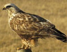 bird conservation | Birds Calgary749 x 578 | 144.6KB | birdscalgary.wordpress.com