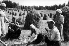 July 8th 1958. Hayfield near Tampere, Finland.
