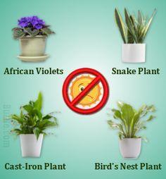 20 Low Light Indoor Plants That Are Easy To Grow Indoor