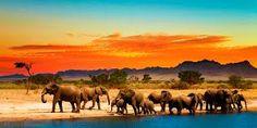 Afbeeldingsresultaat voor safari africa