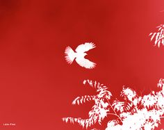 Doves Flight Red Dove in Flight by Lesa Fine is a bold statement of Flight in silhouette form. The bold bright red background pops great below the crisp white silhouette of a dove with a touch of leaves and small branches peeping in from the lower right corner. Modern image for wall art in any room.   Staging, interior decor, home staging, interior decorating, interior design, wall art, silhouette art, bold artwork, home styling, staging art ideas