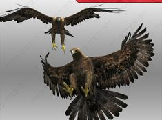 Golden Eagle Animated