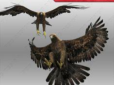 Golden Eagle Animated