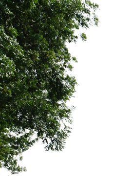 tree corner png by gd08.deviantart.com on @deviantART
