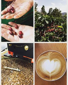#Happy #nationalcoffeeday ! Celebrate the drink we all #love and acknowledge the hard #work and dedication of #farmers in the coffee lands #uniqueexperience #sustainable #ticoroasters #downtowncampbell #local