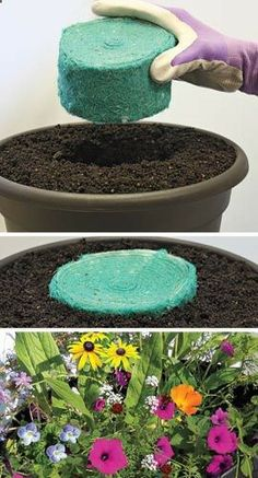 Flower Rocket - The effortless way to grow flowers! For less than $4 per pot you can enjoy colorful annuals all summer long by slipping the pod in a pot of soil, then water - how easy is that? Website has other interesting ideas, from pods to rolls of seeds.
