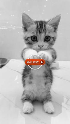 - Estás en el lugar correcto para tendencia decoracion Aquí presentamos tendencia 2018 que está bu - Funny Animal Videos, Cute Funny Animals, Cute Baby Animals, Cute Cats And Kittens, Kittens Cutest, Funny Cat Memes, Funny Cats, Dog Treat Packaging, Animal Categories