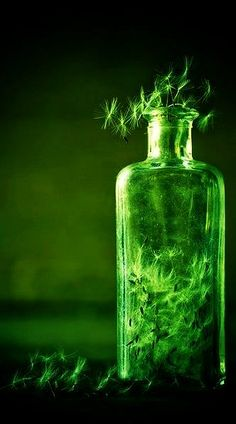 cool contemporary dandelion clock art photo, the green fairy , vampire , gothic absinthe symbolism Glorious GREEN - Bottle World Of Color, Color Of Life, Go Green, Green Colors, Green Tips, Absinthe, Make A Wish, Emerald Green, Emerald City