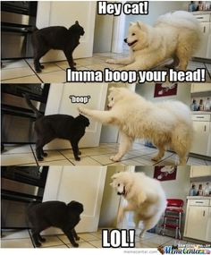 Some dogs just think everyone is their friend. haha