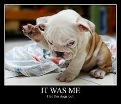 puppy memes funny - Google Search