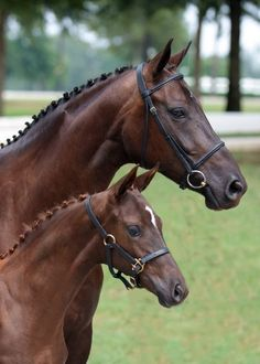 Lovely Warmblood mare and foal