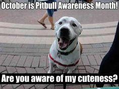 Happy Pitty October!