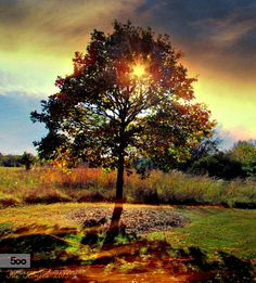 The End of Summer by Meezer3. Please Like http://fb.me/go4photos and Follow @go4fotos Thank You. :-)