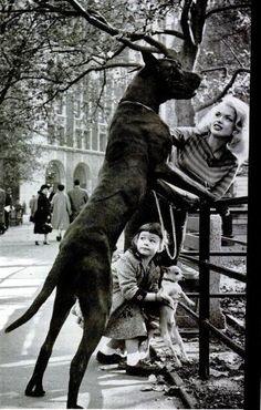Jane Mansfield & Her Great Dane, Daughter Mariska Hargitay & Chihuahua