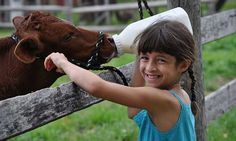 Wondering where to take the kids to get friendly with farm animals? Browse this list of local petting farms in southeast Michigan and beyond.