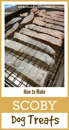 How to Make SCOBY Dog Treats. This is a GREAT way to use up your left over SCOBY's from making homemade kombucha. Plus, it gives your pup a probiotic boost!  realfoodrn.com #scoby #dogtreats