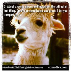 How social media (and alpacas) can prep you for a high school reunion!     More tips: http://www.comediva.com/how-facebook-killed-the-high-school-reunion