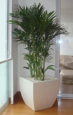 New art deco interior plants 45 Ideas Decor, Office Plants, House Plants Indoor, Interior Plants, Cool Apartments, Plant Decor Indoor, Interior Garden, Plant Decor, Interior Deco