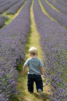 Country Purple with lavender fields and little boy Lavender Cottage, Lavender Blue, Lavender Fields, Lavander, Mayfield Lavender, Lavenders Blue Dilly Dilly, Shooting Photo, Cute Kids, Beautiful Flowers