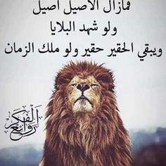 الأصيل Arabic Words, Arabic Quotes, More Than Words, Arabic Coffee, Spam, Knowledge, Quote