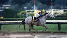 Lady's Secret (USA) 1982 (Secretariat-Great Lady M) starts: 45 wins: 25-9-3 earnings: $3,021,325.