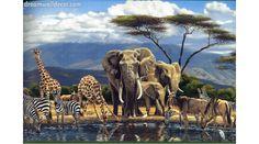 Jungle African Elephant Wild Animals Wallpaper Border Animal Dream Wall