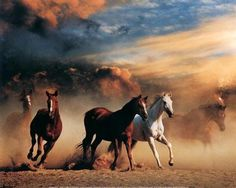 """""""a poster of horses so badly torn  and yet  the spirit of their wildness   still catches me  and leaves me  breathless  in their hot, fragrant dust."""""""