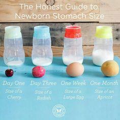 Newborn stomach size