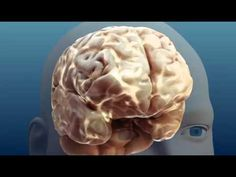 Alcohol and your Brain - GREAT video clip. Will use it to intro Alcohol and have students watch before they do the Virtual Bar Webquest