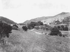 View looks north up Coldwater Canyon at the Haines lemon farm and the Sheffler residence. The Rodeo Land and Water Company later developed the canyon as one of the prime residential areas in Beverly Hills north of Sunset Boulevard, 1910