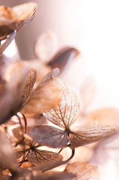 Fall in peach tones Shades Of Peach, Deco Floral, Soft Autumn, Belle Photo, Aesthetic Wallpapers, Beautiful Flowers, Flowers Nature, Beautiful Pictures, Nature Photography