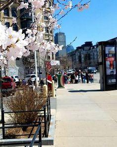 Things are blooming in #Boston. #BostonLife #BostonAttitude #VisitBoston