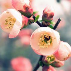 Welcome Spring #iPad  #Wallpaper | U can enjoy more retina wallpapers here:http://www.ilikewallpaper.net/ipad-wallpaper/.