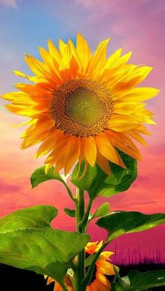 #sunflower #flower