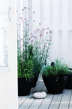 Container Gardening - An Answer To Minimal House For Increasing Vegetation Nordic Feeling Patio Plants, Outdoor Plants, Outdoor Gardens, Potted Plants, Back Gardens, Small Gardens, Balcony Garden, Garden Pots, Potted Garden