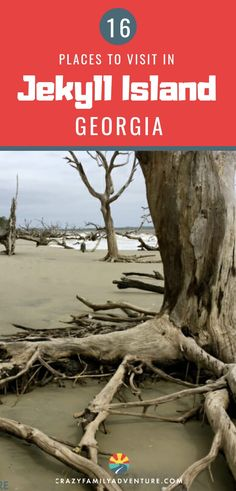 Vacation tips for Jekyll Island, Georgia. This is an extraordinary vacation destination with kids. Aside from the incredible driftwood beach and other beaches in the surrounding Golden Isles, there. Beach Vacation Tips, Best Island Vacation, Vacation Ideas, Beach Vacations, Beach Travel, Vacation Destinations, Lanai Island, Island Beach, Driftwood Beach Jekyll Island