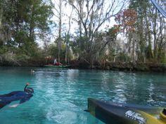 crystal river florida | Crystal River, FL