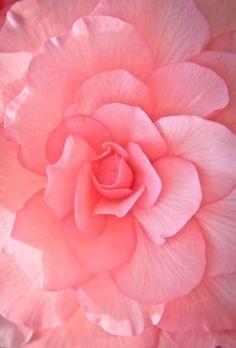 lushalla: Pink