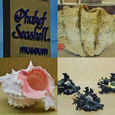 Thailand ~ Phuket ~ Seashell Museum