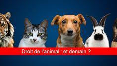 Un concours pour poursuivre la réforme du droit de l'animal - Fondation 30 Millions d'Amis