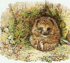 pagewoman: Old Mr. Prickly Pin later renamed Mr. Pricklepin by Beatrix Potter 1905