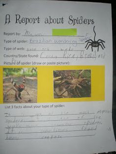 Third Grade Love: ~~Pig and Spider Research Reports & Freebies~~