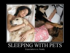 Sleeping with pets // funny pictures - funny photos - funny images - funny pics - funny quotes - #lol #humor #funnypictures