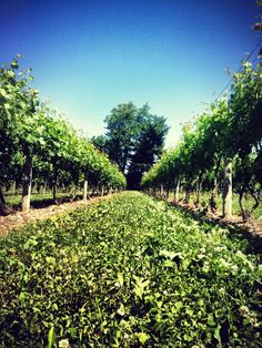 Casa Larga Vineyards | Fairport, NY - high quality, award winning wines, and growing to be one of the leading wine producers in New York's Finger Lakes Region.