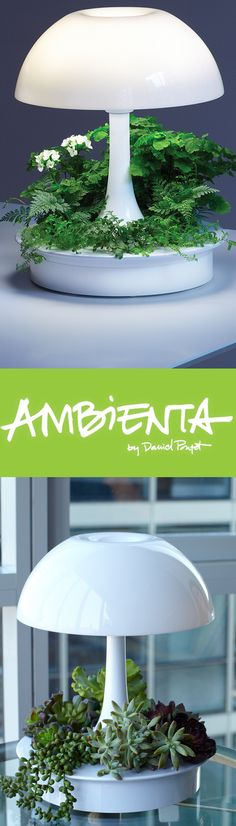 Meet AMBIENTA, a lamp designed to grow plants and bring light to your space. Unique soilless technology requires less water and an integrated LED grow light provides plants with the light they need. Visit sagegreenlife.com to learn more.