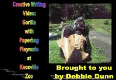 Creative writing video: Gorilla with paper-bag playmate at Knoxville Zoo