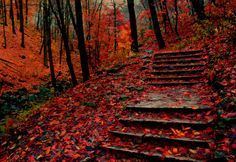 lori-rocks:  Autumn Steps, Grant Park, Wisconsin (by Indy Kethdy)