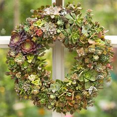 Make a wreath from succulent plants A whole wreath made of those plants. Delete after viewing.